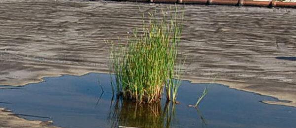 Grass grown on a roof