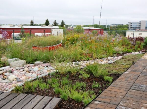unmaintained green roof