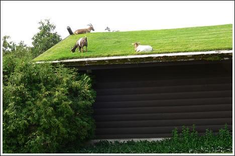 rooftop grass field